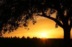 Tree silhouetted på solnedgången Arkivbilder