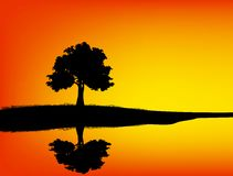 Tree silhouetted and reflection Royalty Free Stock Photos