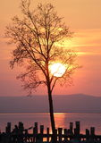 Tree silhouetted by the setting sun Stock Image