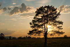 Tree silhouetted at sunset Royalty Free Stock Image