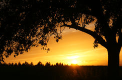 Tree silhouetted at sunset Stock Images