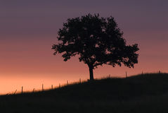Tree silhouetted at sunset. Scenic view of lone tree silhouetted on hillside with colorful sunset background Stock Images