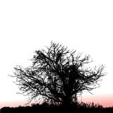 Tree silhouetted at sunset Royalty Free Stock Photography