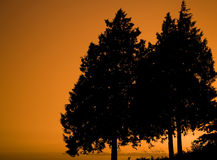 Tree Silhouettes Royalty Free Stock Photo