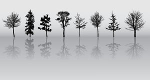 Tree silhouettes Stock Photography