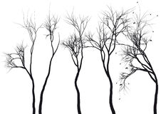 Tree silhouettes,. Set of detailed tree silhouettes Royalty Free Stock Image