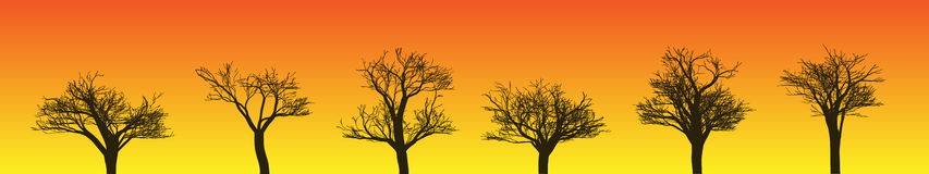 Tree Silhouettes. Vector Illustration of Six Tree Silhouettes Against Orange/Yellow Sky (.jpg file aso has clipping path Stock Photo