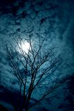 Tree silhouettes. With clouds and sky Royalty Free Stock Images