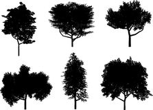 Tree silhouettes. Detailed silhouettes of various trees Vector Illustration