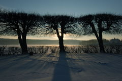 Tree silhouettes. Silhouette of three trees against a clear blue sky in a winter landscape, the sun setting behind them Stock Photos