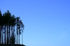 Tree silhouettes. Silhouettes of fir trees on blue sky background Stock Photography