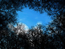 Tree silhouettes. Tree / branches silhouettes with sky in background Stock Photos