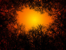 Tree silhouettes. Tree / branches silhouettes with sunset in background Royalty Free Stock Photos