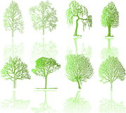 Tree  silhouettes Royalty Free Stock Images
