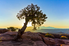 Tree Silhouettes Above the Canyonlands of Utah Royalty Free Stock Images