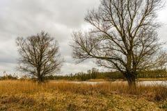 Tree silhouettes against a cloudy sky Stock Photos