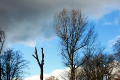 Tree silhouettes against a dramatic winter sky stock photography