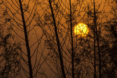 Tree silhouettes against sunrise Royalty Free Stock Photos