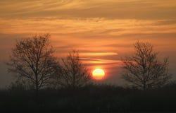 Tree silhouettes against sunrise Stock Photo