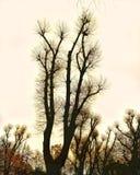 Tree_magic royalty free stock images