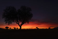 Tree silhouettes in a beautiful sunset. With colorful clouds Stock Images