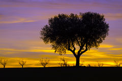 Tree silhouettes in a beautiful sunset. With colorful clouds Stock Photo
