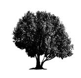 Tree silhouettes 01 stock photography