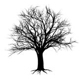 Tree silhouettes 2014 A5 [Converted]. An illustration of a bare tree in silhouette Stock Image