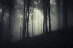 Tree silhouettes in a dark forest with fog Stock Image