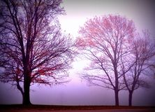 Tree silhouettes in dense fog. Trees in November fog with dark vignette Stock Photo