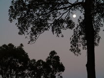 Tree silhouettes by full moon night Royalty Free Stock Photography