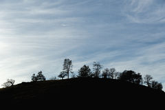 Tree Silhouettes on Hillside. Trees against blue sky with wispy clouds Stock Photos