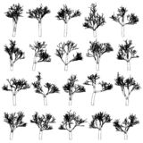 Set of tree silhouettes, CG generated. Vector design elements