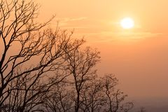 Tree silhouettes and sunset. Warm evening sun above naked trees on a bright winter day in Karlsruhe, Germany Stock Photos