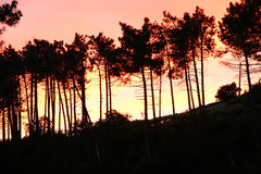 Tree Silhouettes in the sunset Royalty Free Stock Photography