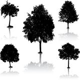 Tree silhouettes. [Vector]. Stock Photography