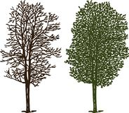 Tree silhouettes in winter and in summer royalty free stock image