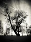 Tree Sillhouette At Sunset Royalty Free Stock Images