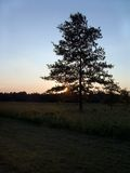 Tree Silohette. A lone tree silohetted against a setting sun Royalty Free Stock Photo