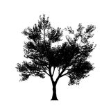 Tree silouette in high resolution Stock Image