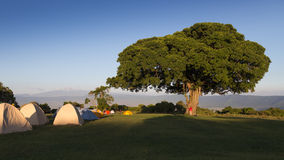 Tree in Simba Campsite. Serengeti and Ngorongoro National Parks, Tanzania Royalty Free Stock Photos