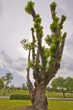 Tree at Singapore Japanese Garden Royalty Free Stock Image