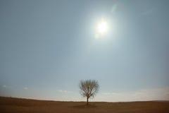 Tree. Single tree in summer landscape Stock Image