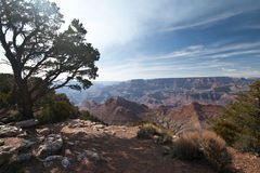 A tree sits over the grand canyon Stock Photo