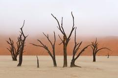 Tree skeleton 13 Stock Images