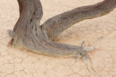 Tree skeleton, Deadvlei, Namibia Royalty Free Stock Images
