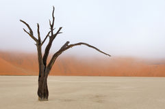 Tree skeleton, Deadvlei, Namibia Royalty Free Stock Photography