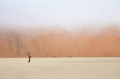 Tree skeleton, Deadvlei, Namibia Royalty Free Stock Images