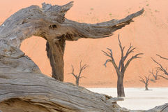 Tree skeleton at Deadvlei Stock Photos