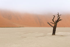 Tree skeletons, Deadvlei, Namibia Royalty Free Stock Photography